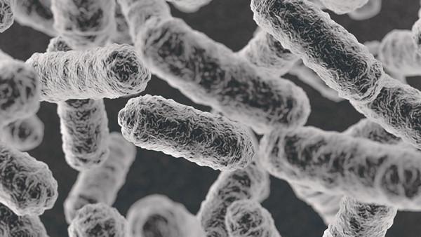 食品細菌検査